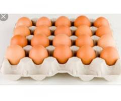 Venta de huevo