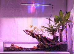 Acuario + Peces + Filtro + Luces + Plantas + Asesoría