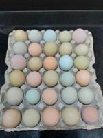Venta huevos criollos