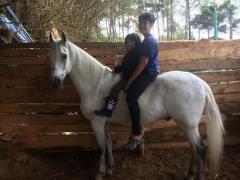 Se vende caballo paso fino