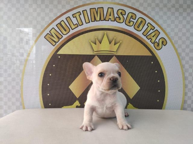 Preciosos cachorros bulldog francés - 1/1