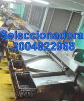 LAVADORA DE FRUTAS, SELECCIONADORA, ENCERADORA,CEPILLADORA - MARMITA PARA LACTEOS
