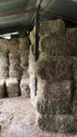 Vendo silo de caña de maiz , heno y gallinaza